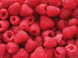 raspberry ketone review