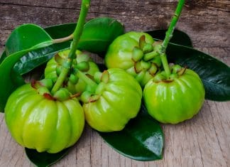 garcinia cambogia review