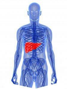 lichaam-reinigt-zichzelf-met-lever-1